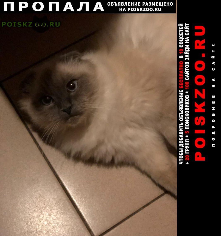 Пропал кот верните любимого г.Липецк