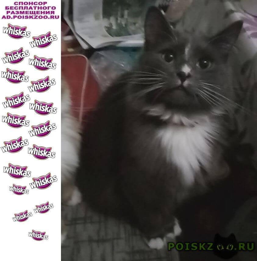 Пропал кот дымок г.Ильинский (Московская обл.)
