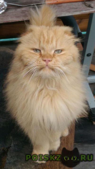 Пропал кот помогите в поиске домашнего любимца г.Кубинка