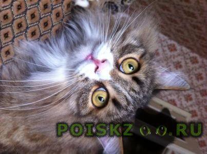 Пропал кот г.Дзержинск