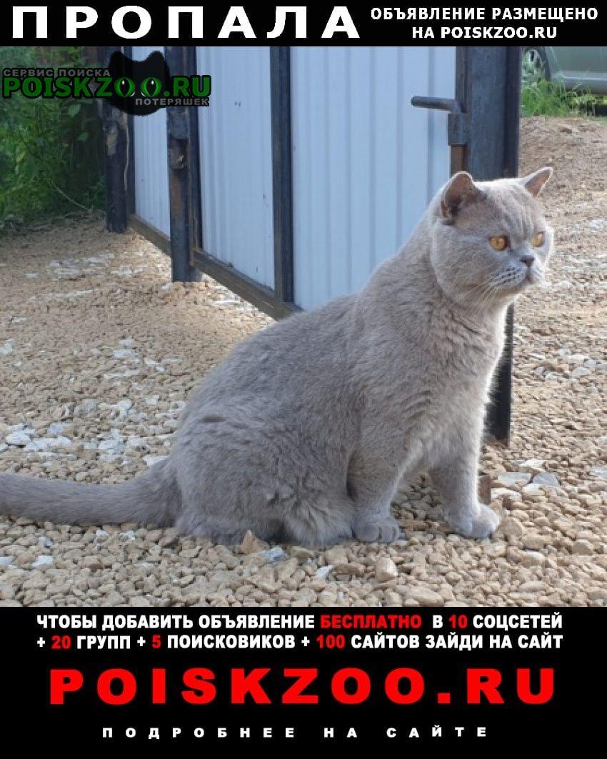Чехов Пропал кот породы британец, пепельный