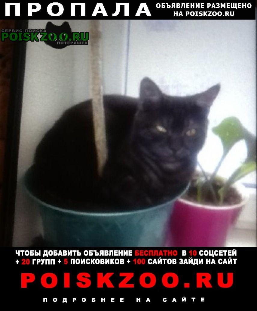 Пропала кошка. кот помогите найти пожалуйста Ростов-на-Дону