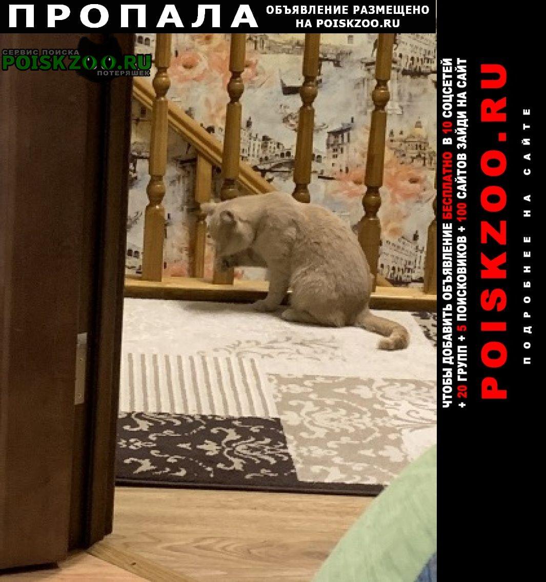 Пропала кошка Мичуринск