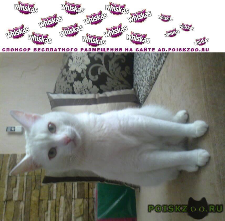 Пропал кот белый г.Омск