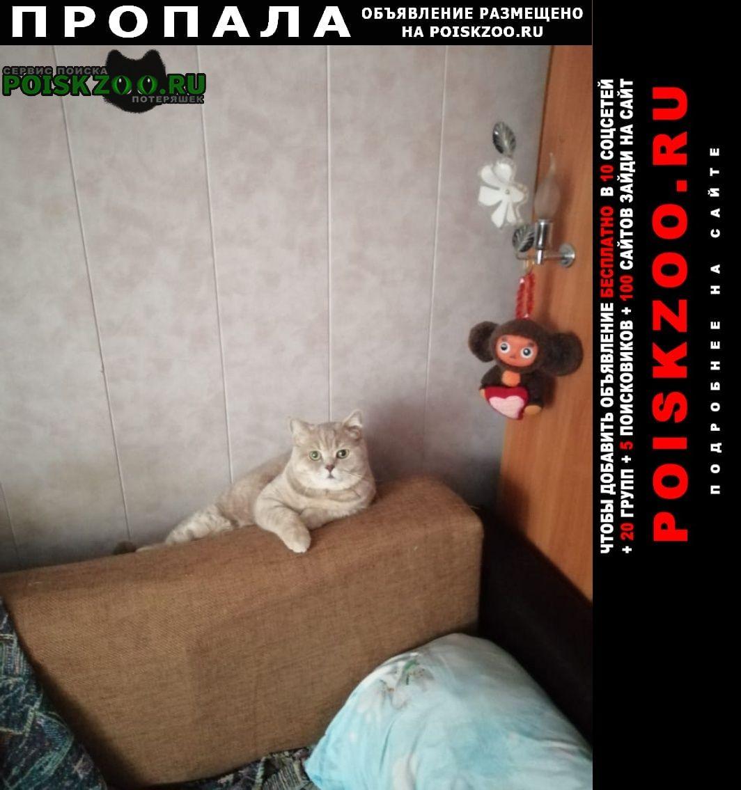 Пропал кот верните за вознашрождение Торжок