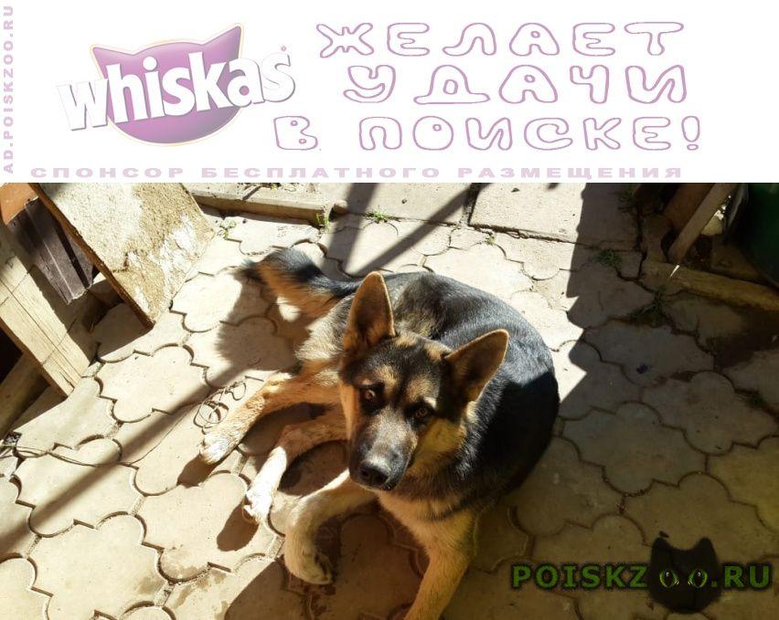 Пропала собака кобель г.Малоярославец