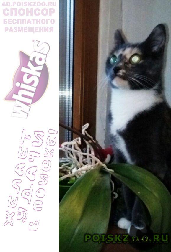Пропала кошка года г.Москва