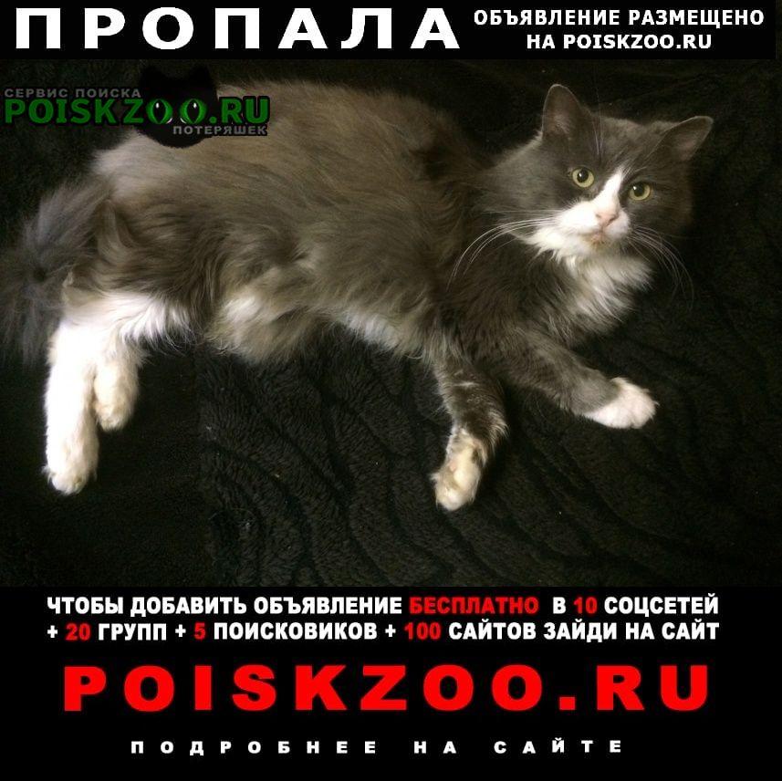 Пропал кот Смоленск