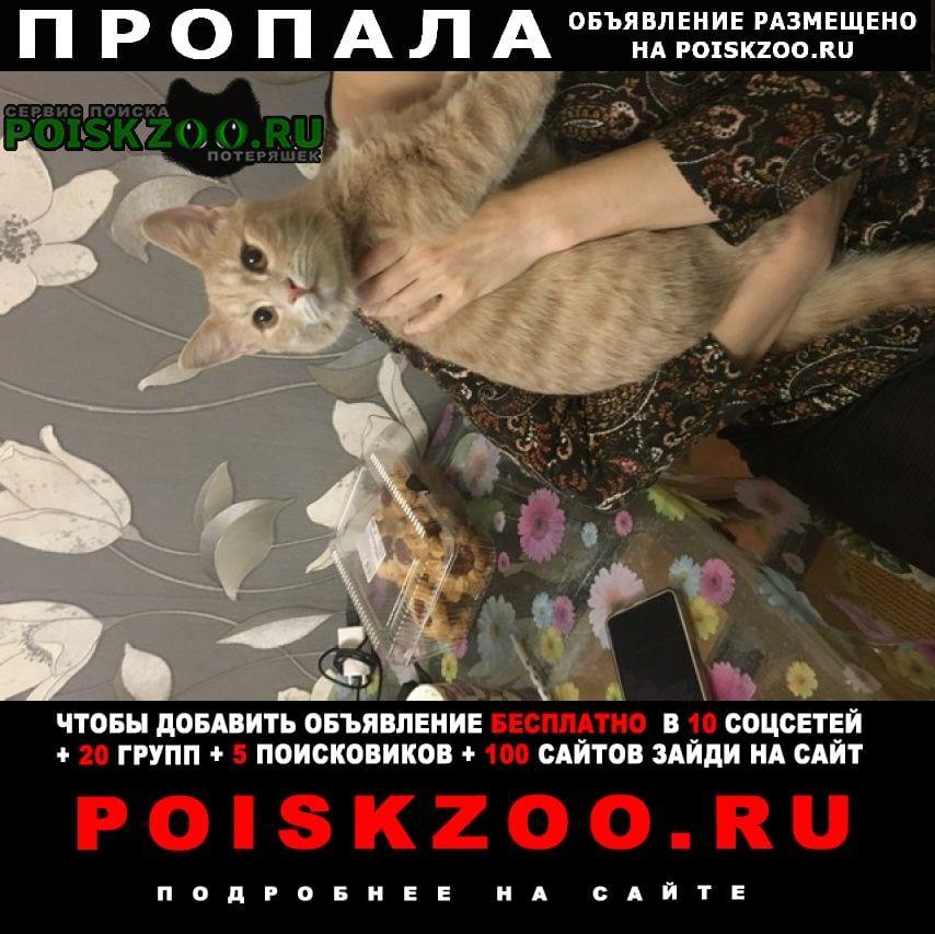 Пропал кот джеки г.Щелково