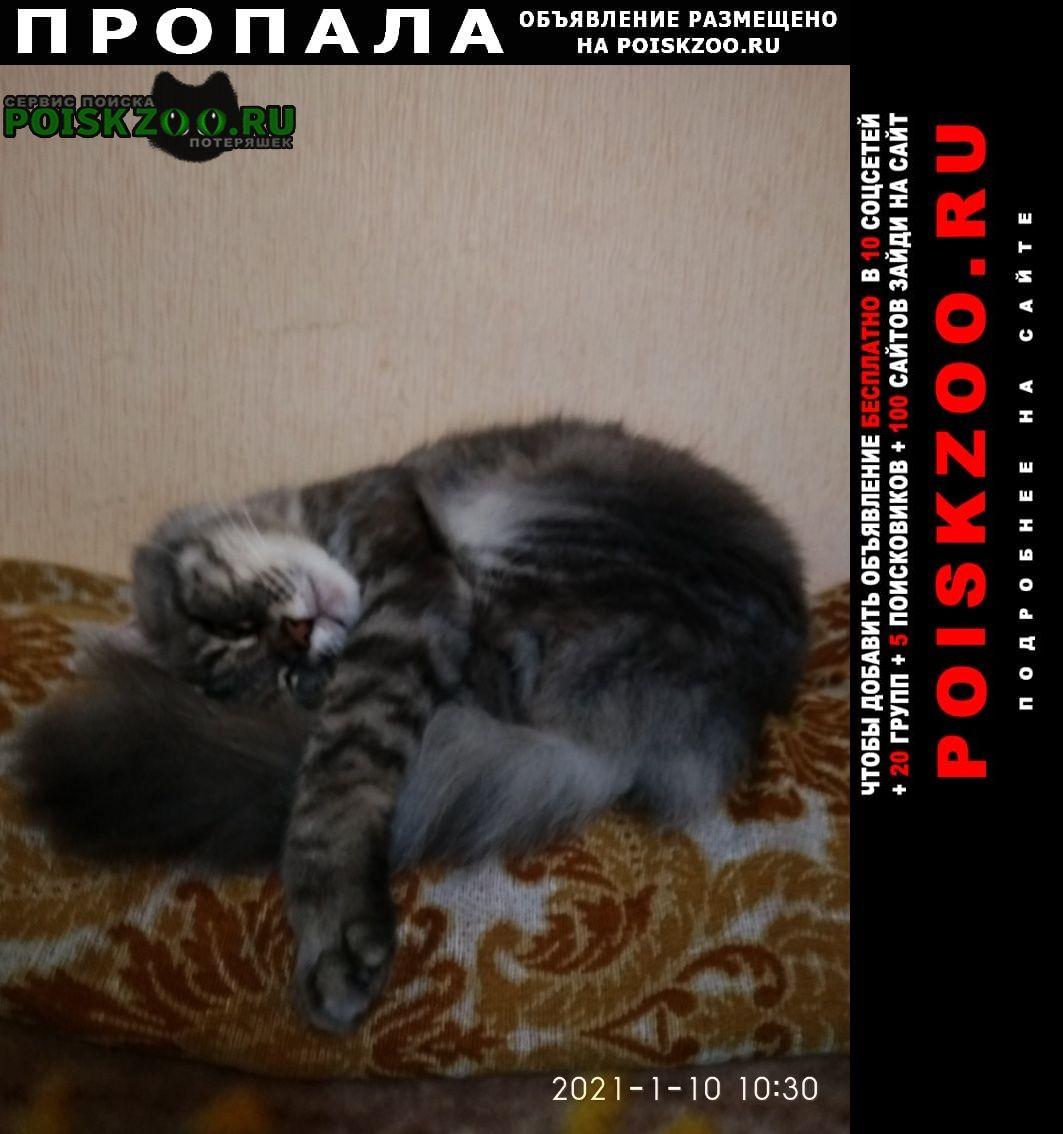 Пропала кошка 18 января 2021 г кот барсик. Батайск