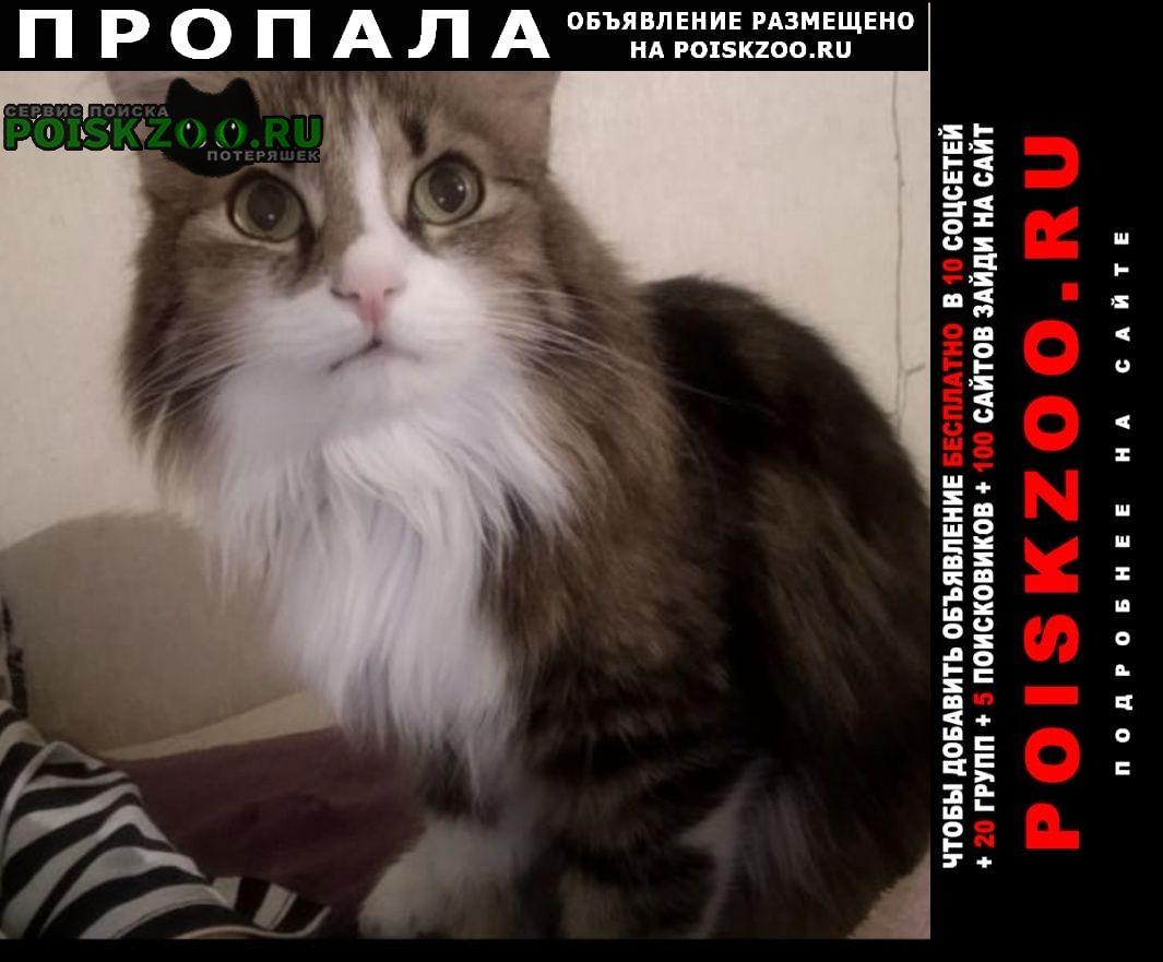 Пропала кошка, стасова ставропольская Краснодар