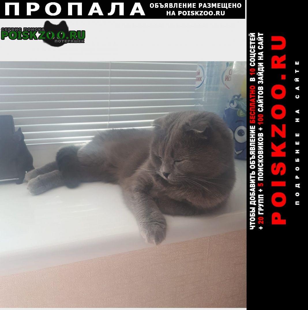 Пропала кошка помогите найти кошку Севастополь