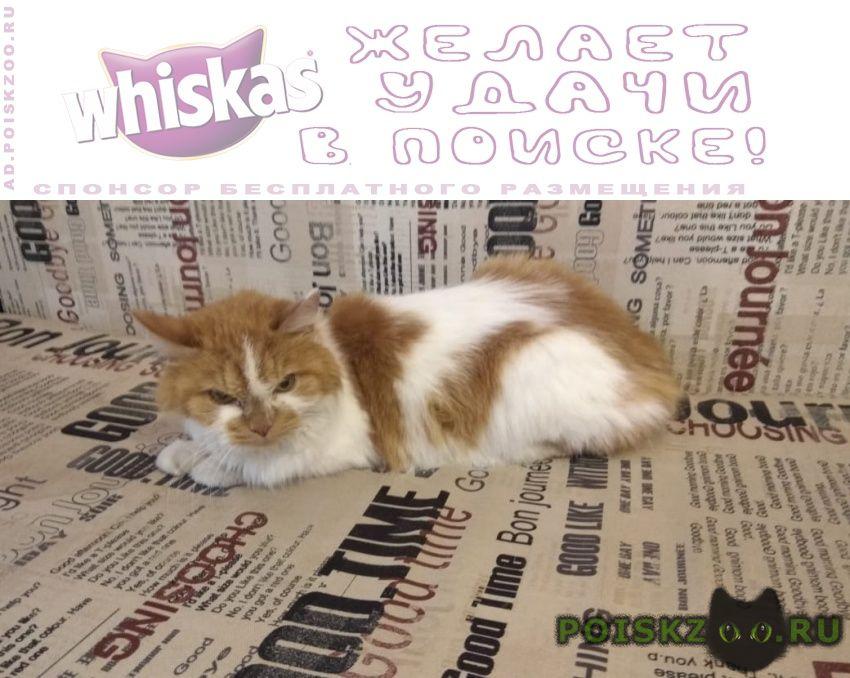 Пропала кошка вознаграждение нашедшим г.Москва