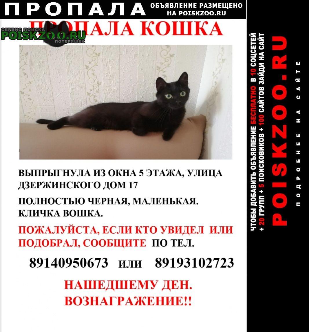 Пропала кошка Александровск-Сахалинский