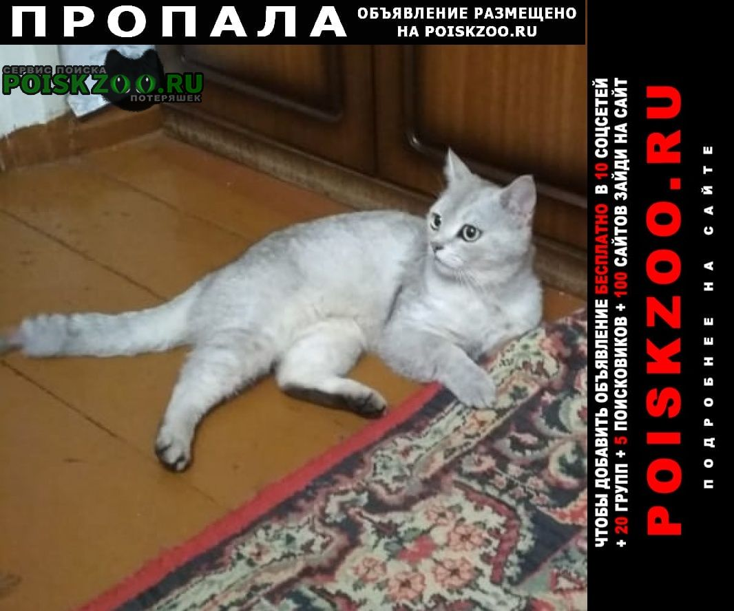 Пропал кот район северный Таганрог