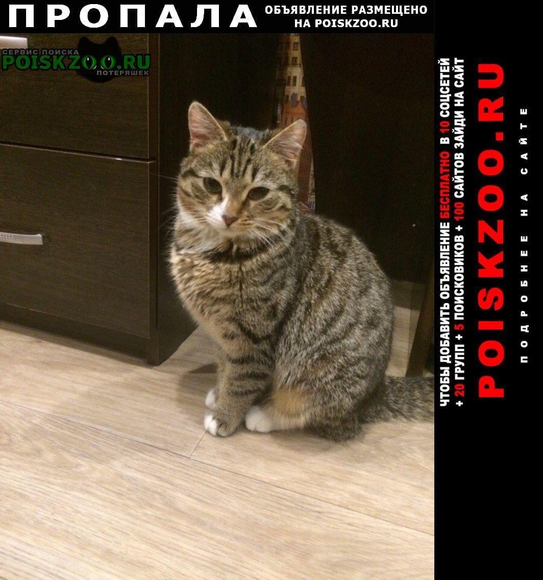 Пропала кошка Архангельск
