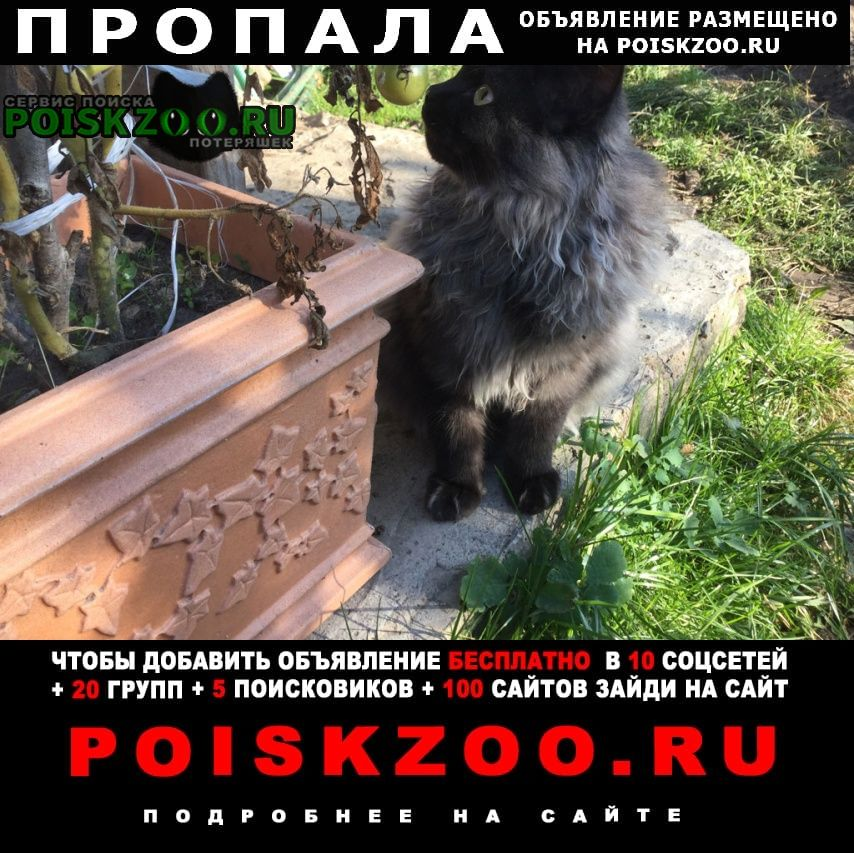 Пропал кот Бобруйск