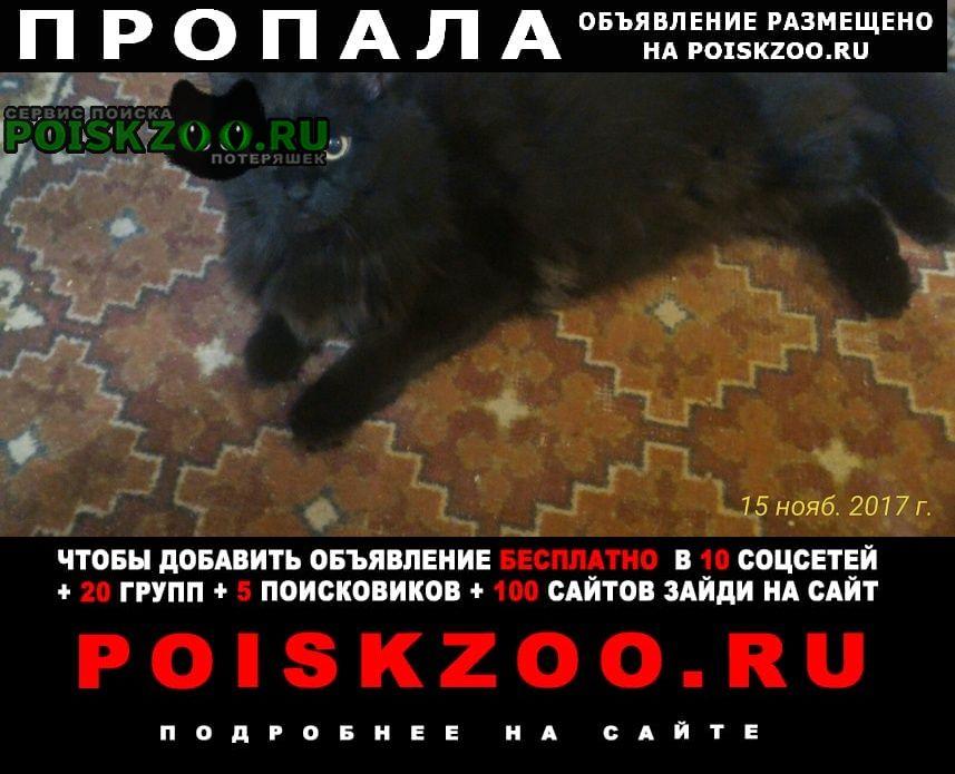 Пропала кошка Челябинск