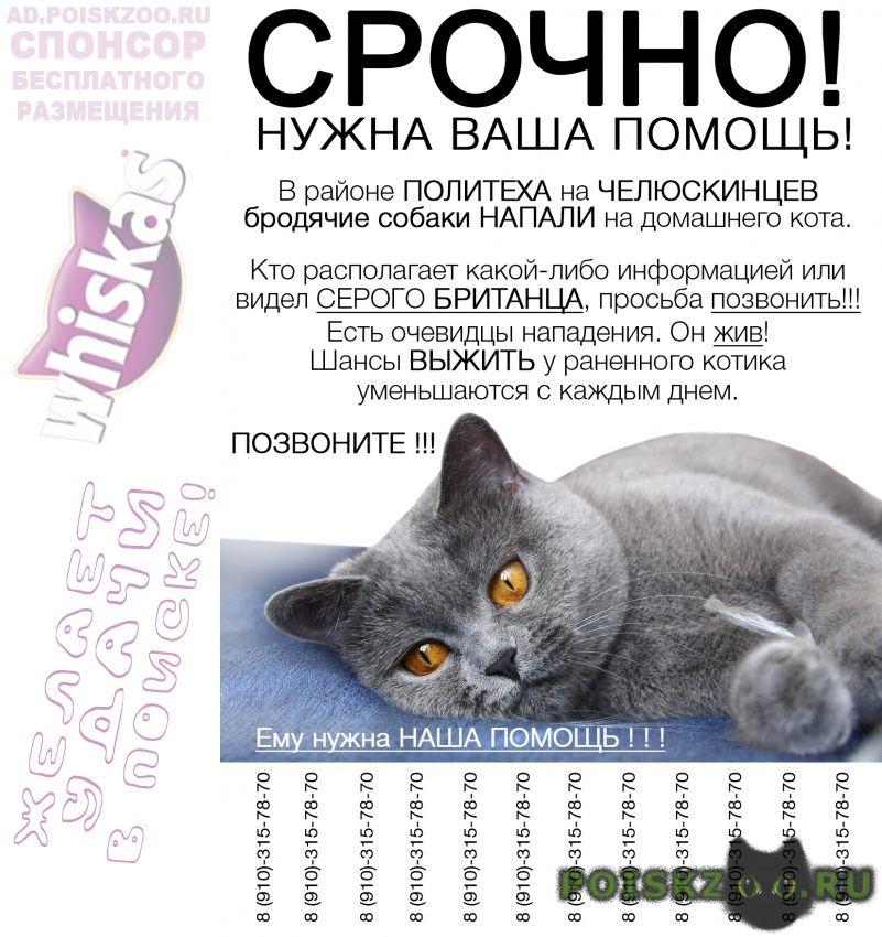 Пропал кот --наш серо- голубой британец в беде г.Курск