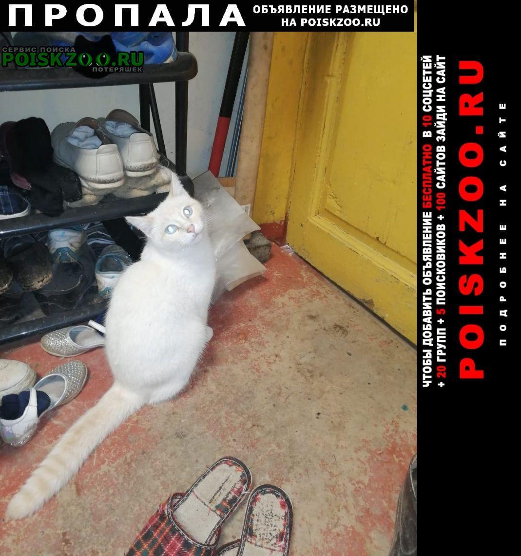 Пропала кошка кот Егорьевск