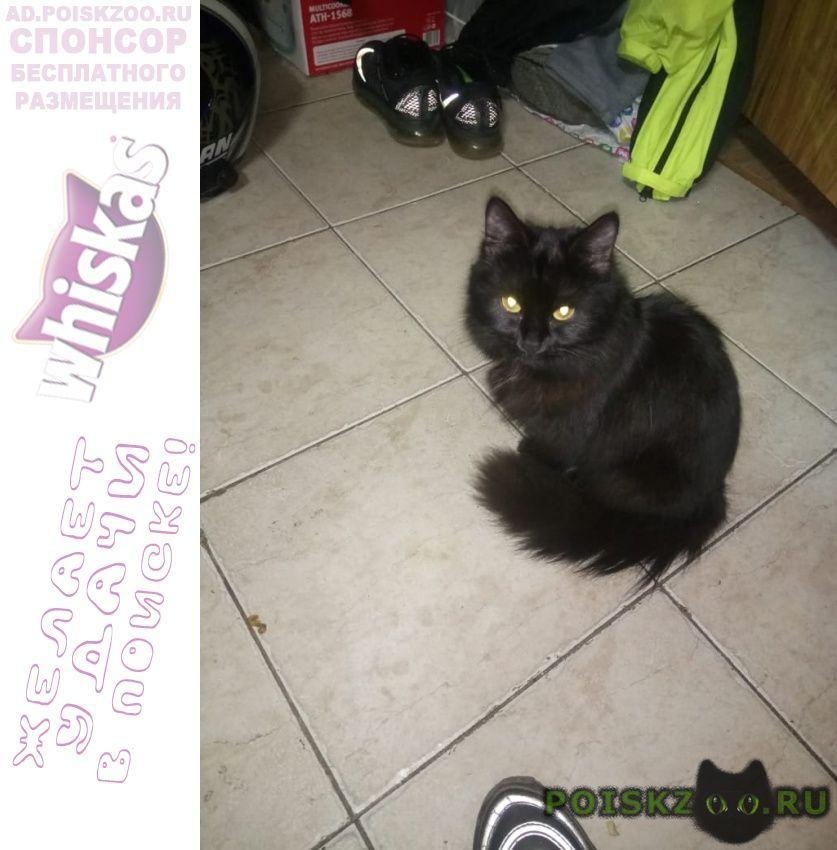 Пропала кошка чёрная пушистая годовалая кошечка в крас г.Краснодар