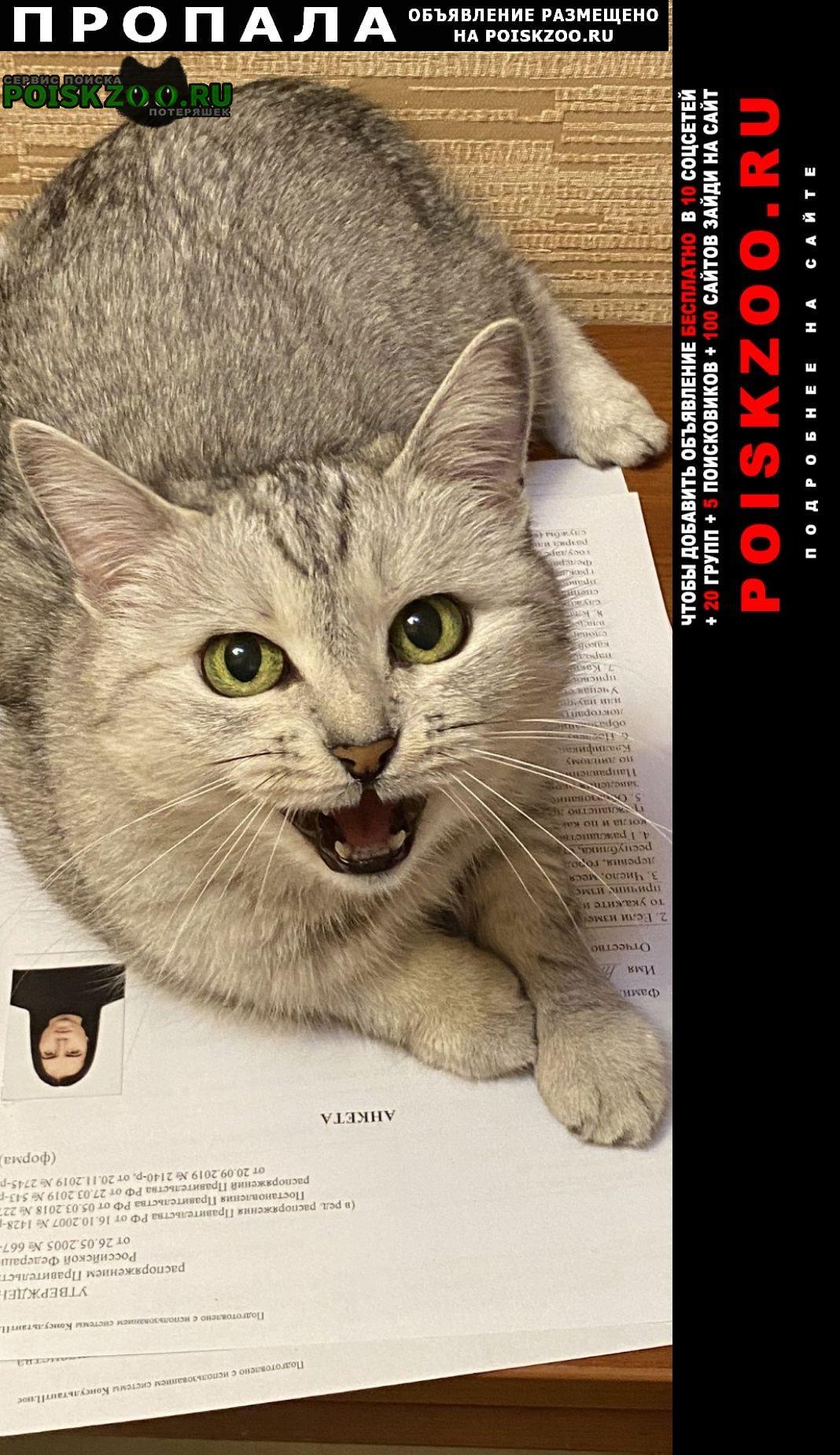 Пропала кошка просьба вернуть за вознаграждение Пенза
