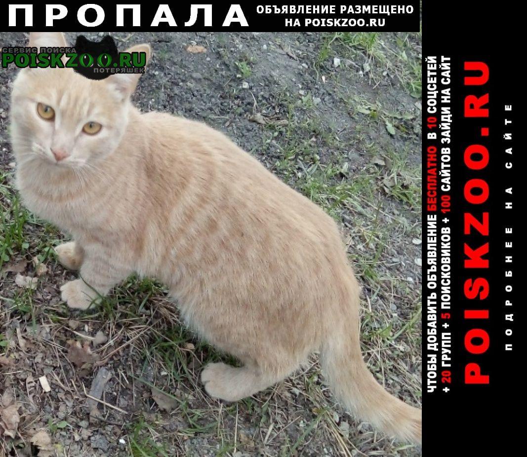 Пропала кошка кот, Саратов