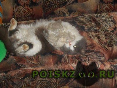 Пропала кошка помогите г.Подольск