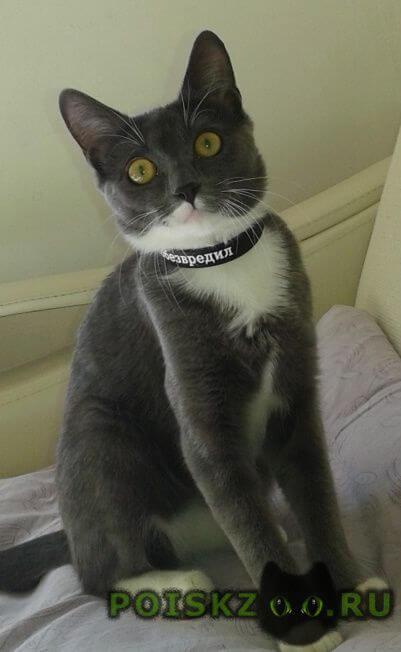 Пропала кошка г.Кострома