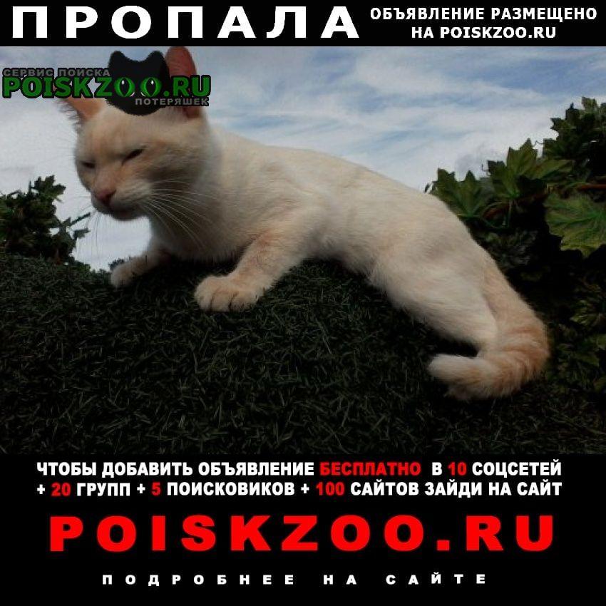 Пропал кот фокс Уфа
