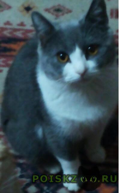 Пропал кот  порода британская Краснодар