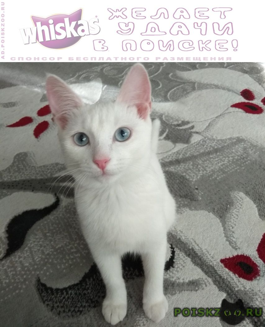 Пропала кошка белая с голубыми глазами медведково г.Москва