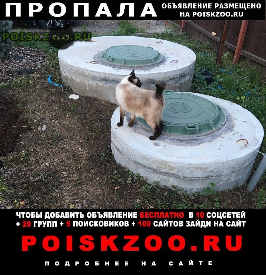 Пропал кот меконгский бобтейл г.Москва