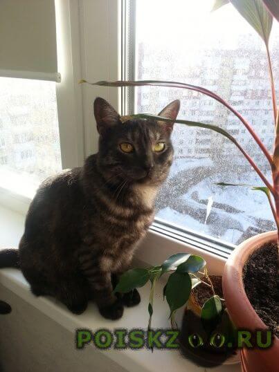 Пропала кошка. г.Пермь