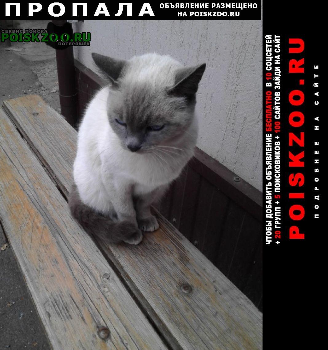 Пропала кошка сиамская, голубые глаза немного косят Железногорск Курская обл.