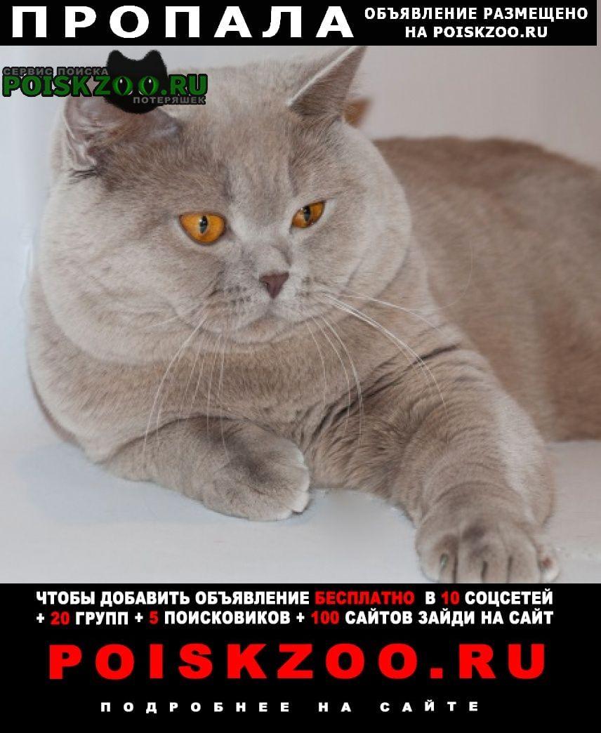 Пропала кошка Брянск