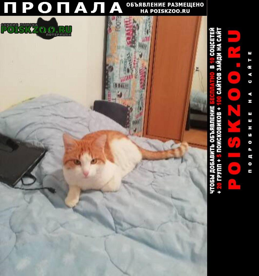 """Пропала кошка кот барсик""""рыжий с белыми Сыктывкар"""