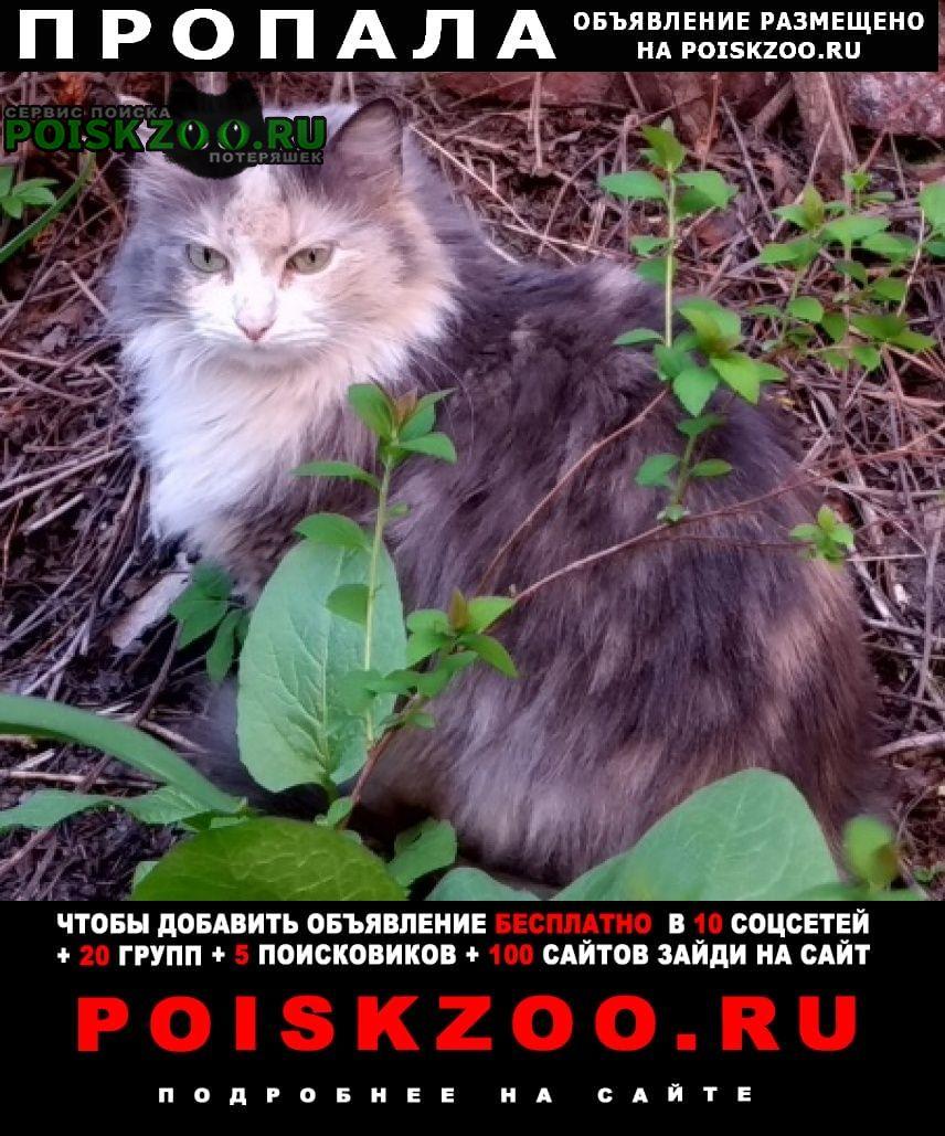 Пропала кошка метро чернышевская, шпалерная улица Санкт-Петербург