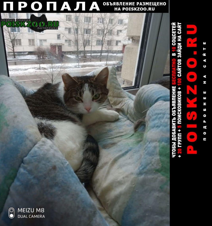 Пропала кошка пожалуйста помогите вернуть малышку Санкт-Петербург
