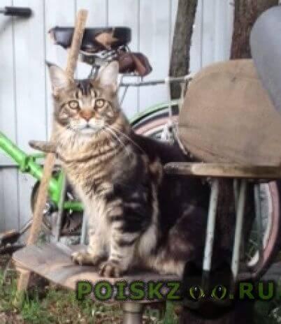 Пропала кошка кот в снт сосновый бор г.Коломна