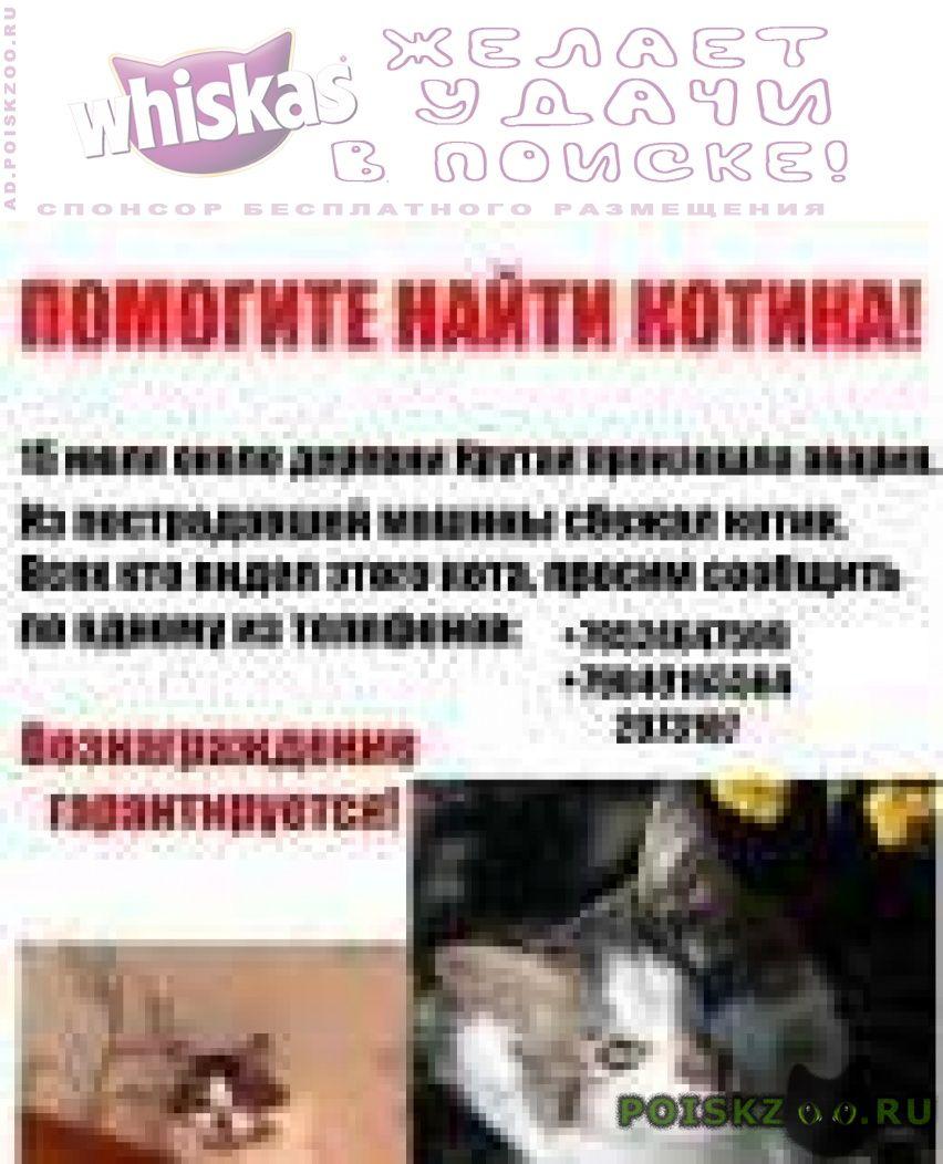 Пропал кот в результате аварии июля г.Кстово