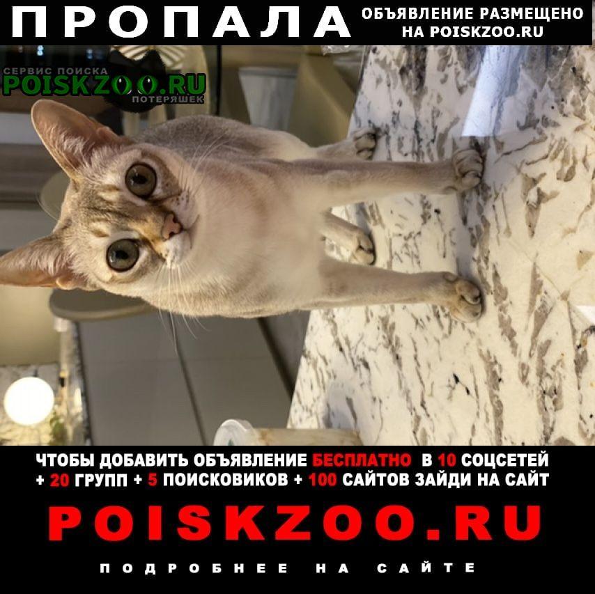 Пропала кошка Всеволожск