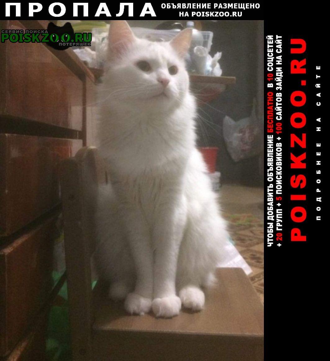 Пропала кошка в ноябре крупный кот Москва