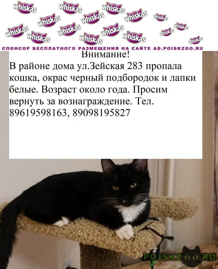 Пропала кошка черного цвета г.Благовещенск (Амурская обл.)