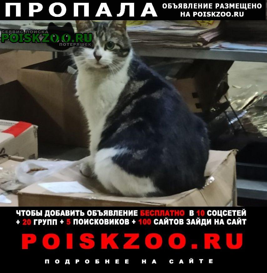 Пропала кошка муся Санкт-Петербург