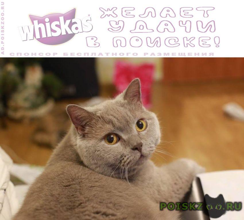 Пропал кот ( ) г.Москва