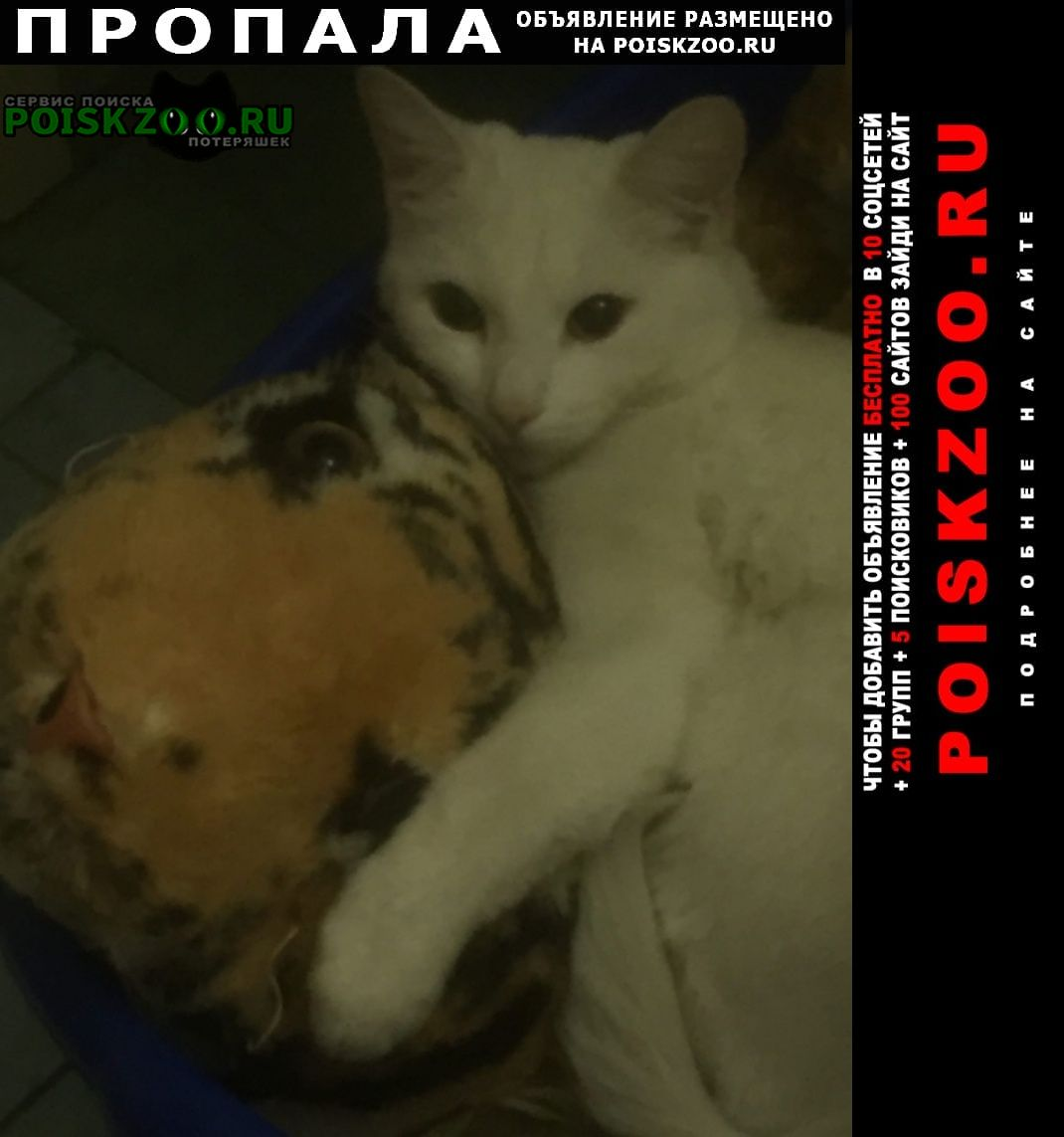 Пропал кот белый Ухта