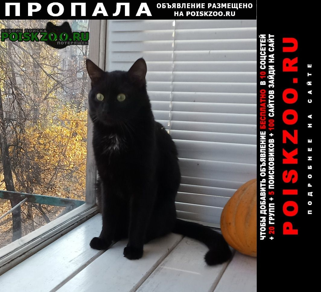 Воронеж Пропал кот черный с зелеными глазами
