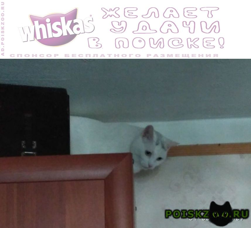 Пропала кошка. г.Санкт-Петербург