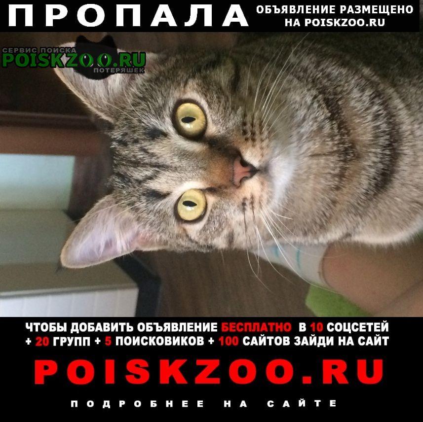 Пропала кошка убежал котик 1, 5 лет. добрый. Москва